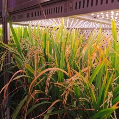 JIUPO 植物培养箱-光照培养箱