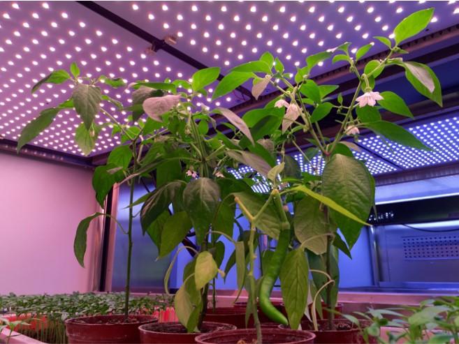 LED植物灯安装使用应该注意什么