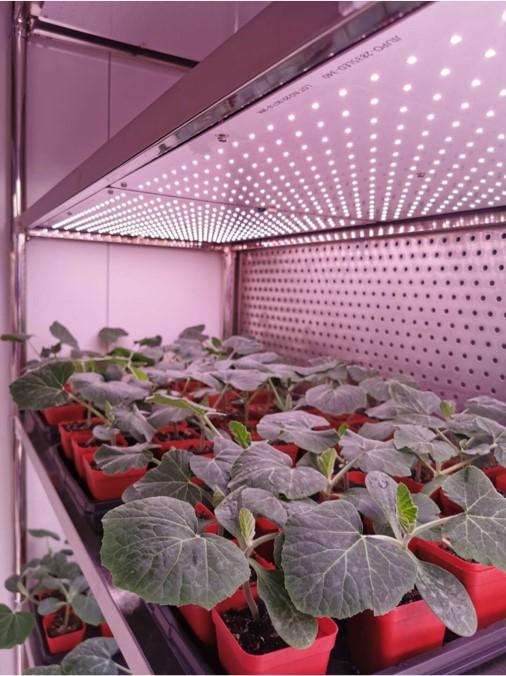 植物培养箱有哪些优势