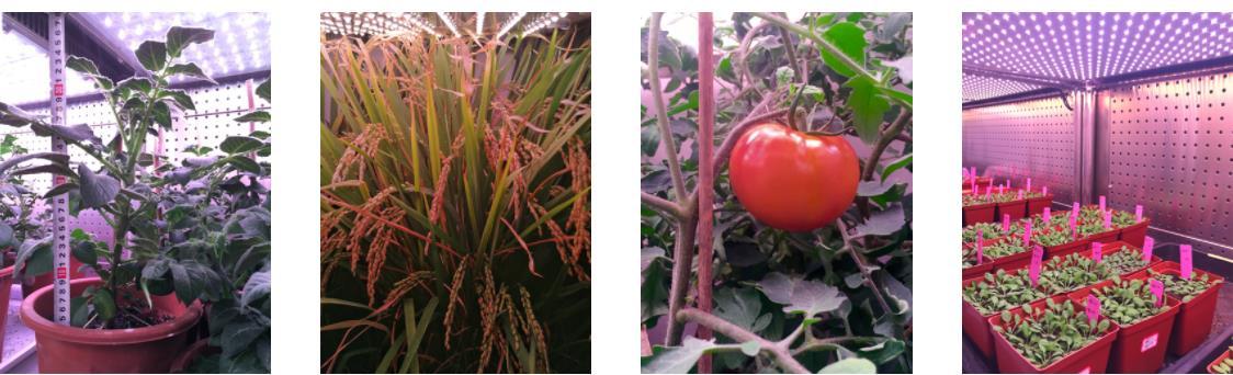 植物光照培养箱 -(300-2000L)