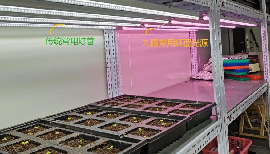 LED组培灯-栽培架补光
