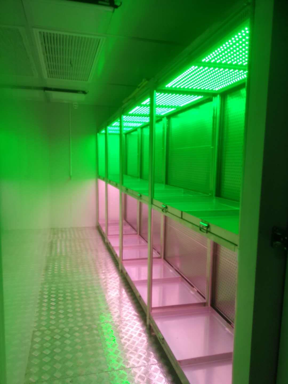 单色光-多色光-特殊光谱定制