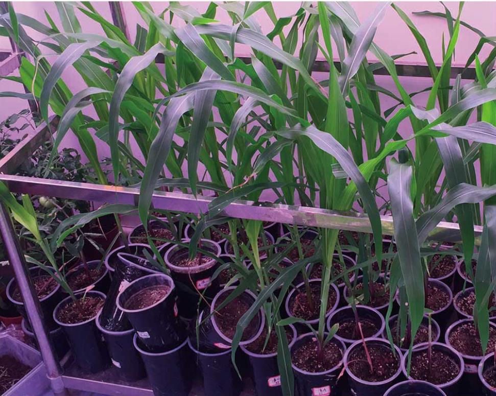 如何维护好植物人工气候室