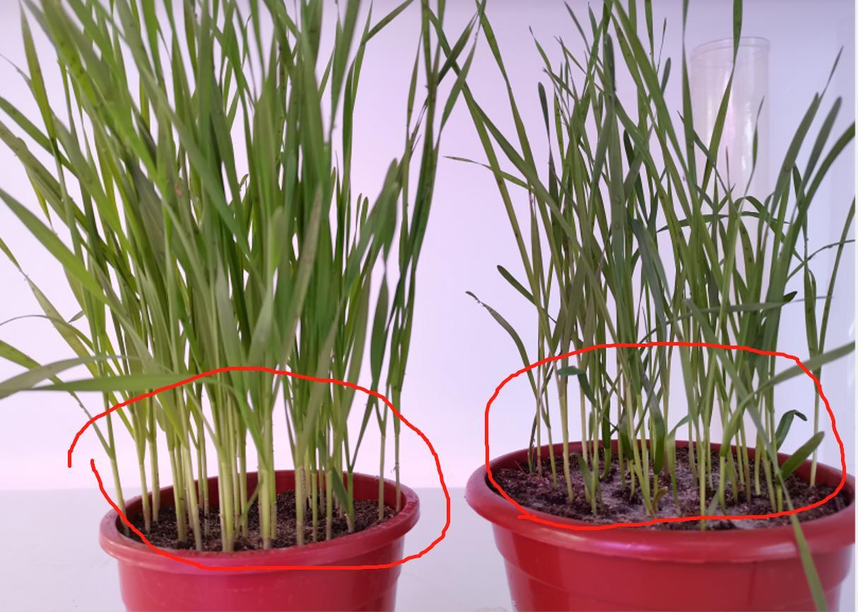 不同灯光环境对植物的影响(钠灯、荧光照明灯管、LED植物生长灯)
