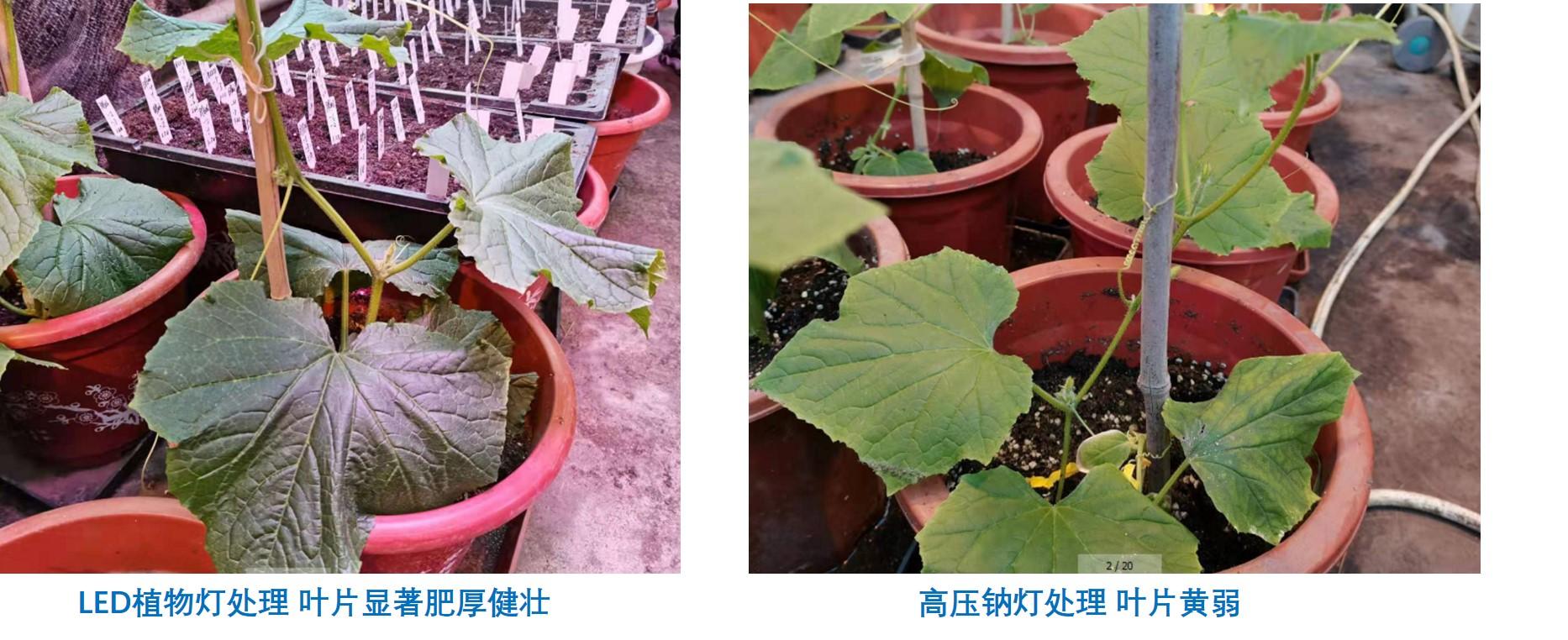 使用植物培养箱要注意哪些细节问题