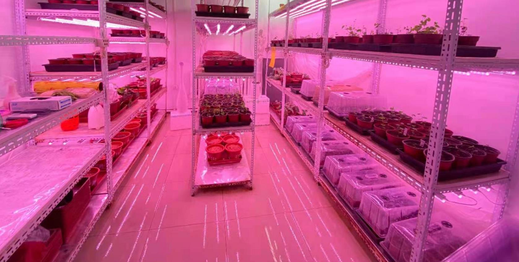 为什么LED植物灯能为植物补光