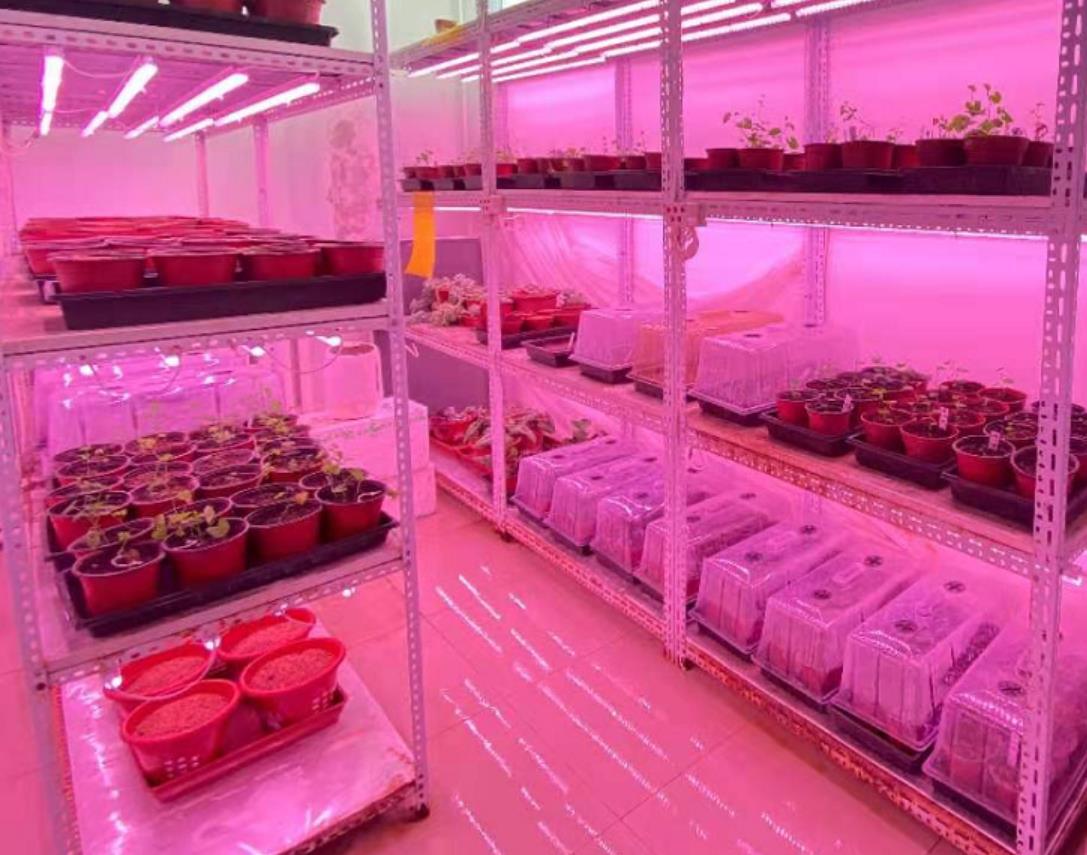 LED植物灯使用评价越来越高的原因