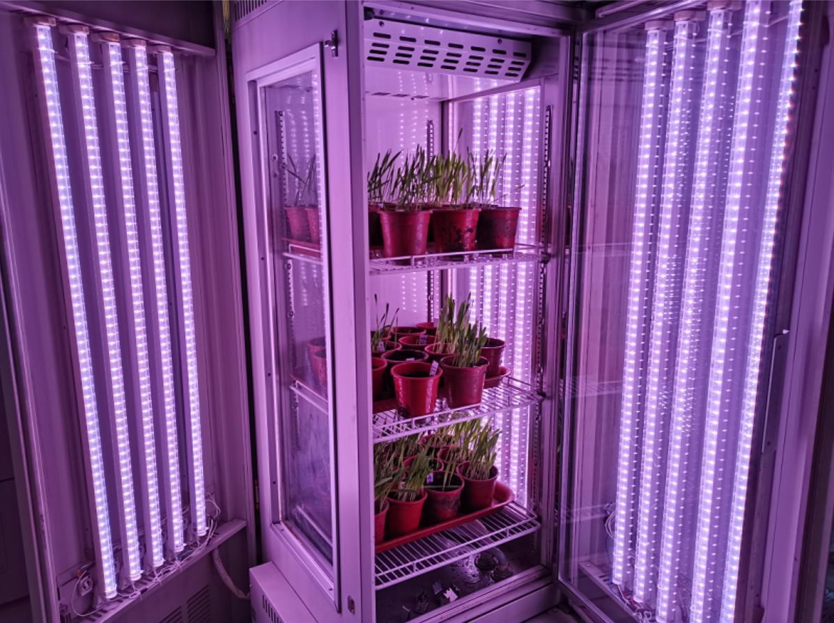 中国农科院-植物病虫害生物国重-人工气候室验收